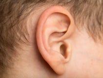 Junge ` s Ohr stockfotos