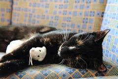 Junge schwarze Katze und weißes Mäusespielzeug Lizenzfreie Stockfotos