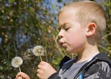 Junge sechs Einjahresjunge, der eine Löwenzahnborduhr durchbrennt Lizenzfreie Stockbilder