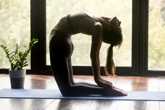 Junge sportliche Frau, die pilates, Eignung oder Yoga Ustrasana-Übung tut stockbild