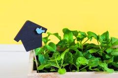 Junge Sprösslinge, Trieb, Sämling, Schössling in einer Holzkiste mit Deckel auf hellem gelbem Hintergrund Das Konzept der Gartena stockfotos