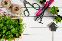 Junge Sprösslinge, Trieb, Sämling, Schössling in einer Holzkiste mit Deckel und Gartenwerkzeuge Flache Lage stockbild