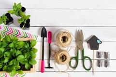 Junge Sprösslinge, Trieb, Sämling, Schössling in einer Holzkiste mit Deckel und Gartenwerkzeuge Flache Lage mit Kopienraum lizenzfreie stockfotografie