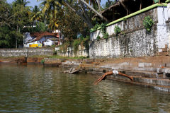 Junge springt in Wasserpool in Indien Lizenzfreie Stockfotos