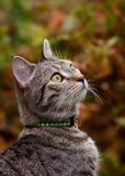 Junge Tabby Cat in Autumn Setting Stockfoto