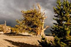 Junge und alte Bäume Lizenzfreie Stockfotografie