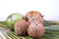 Junge und alte organische grüne braune Kokosnuss auf Palmblatt Stockbilder