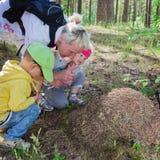 Junge und das Mädchen mit der Großmutter betrachten einen Ameisenhügel Lizenzfreie Stockfotografie