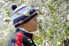 Junge und ein blühender Baum Stockfoto