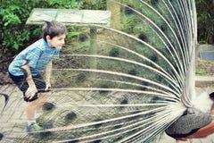 Junge und ein Pfau stockfoto