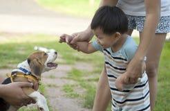 Junge und Hund Lizenzfreies Stockfoto