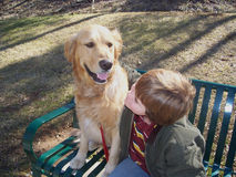 Junge und Hund auf Bank Stockfotografie