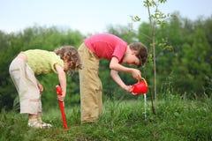 Junge und Mädchen gießen auf gepflanzten Baum Stockfotografie