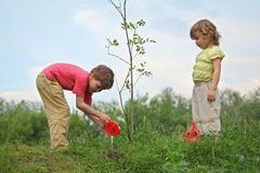 Junge und Mädchen gießen auf Sämling des Baums Stockfotografie