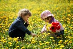 Junge und Mädchen auf dem Sommerblumengebiet Lizenzfreie Stockbilder