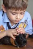 Junge und Meerschweinchen Stockfotos