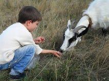 Junge und Ziege Stockfoto