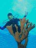 Junge Unterwasseratemgerättaucher- und -feuerkoralle stockfotos