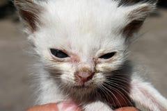 Junge weiße Katze Stockfotos