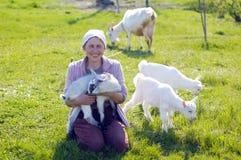 Junge Ziegen und Frau Lizenzfreies Stockfoto