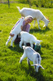 Junge Ziegen und Frau Stockbilder