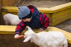Junge zieht eine junge Ziege in einem Zoo ein Lizenzfreies Stockbild