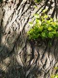 Junge Zweige Lizenzfreie Stockfotos