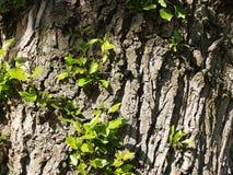 Junge Zweige Stockfotografie