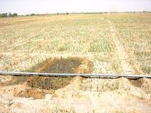 Junge Zwiebel, die gewässert wird Lizenzfreies Stockfoto