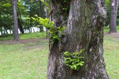 Jungeblätter auf einer Baumrinde Lizenzfreies Stockbild