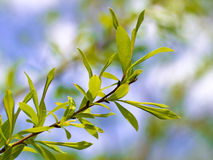 Jungeblätter in Wald 3 Lizenzfreie Stockfotografie