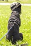 Jungekreuzung Hund Lizenzfreie Stockbilder