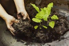Jungen Baum durch die in t gepflanzt zu werden Mann ` s Handgärtner pflanzen, Stockfotos
