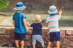 Jungen, die Reptilien im Terrarium aufpassen stockbilder