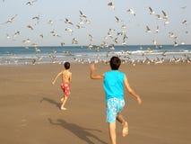 Jungen, die Vögel jagen Stockbild