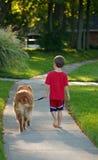 Jungen-gehender Hund Stockfoto