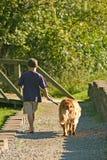 Jungen-gehender Hund Stockbild