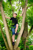 Jungen-kletternder Baum, der nach links schaut Lizenzfreie Stockbilder