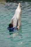 Jungen-Schwimmen mit Bottlenose-Delphin Stockbild