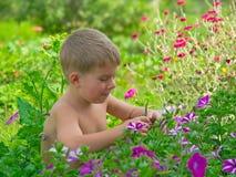Jungen- und Blumenbett Stockfoto