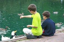 Jungen, welche die Enten speisen Lizenzfreie Stockfotografie