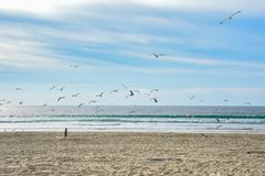 Jungenläufe auf dem Strand stockfotos