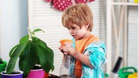 Jungensorgfalt und Sprayblumen Frühlingsblumen zu Hause Erste Blume Wachsende Anlagen und Sprösslingskeimung Little Boy stock video footage