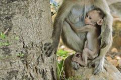 Junger Affe Lizenzfreie Stockfotos