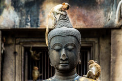 Junger Affe auf Buddha-Bildern Lizenzfreie Stockfotografie