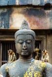 Junger Affe auf Buddha-Bildern Lopburi Thailand Lizenzfreies Stockbild