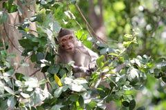 Junger Affe auf dem Baum Stockbilder