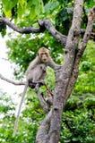 Junger Affe, der auf Baum klettert Stockbilder