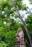 Junger Affe, der auf Baum klettert Stockfoto