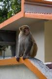 Junger Affe, der auf dem Zaun sitzt Lizenzfreies Stockbild